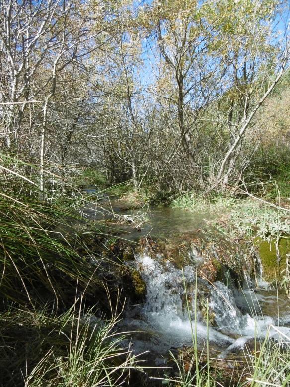 Arroyo de los Endrinales hasta Batán del Puerto (21)